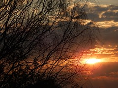 a 18 minutos del sol (Litswds) Tags: sun sunset atardecer sol ramas tree arbol otoo caida del ramitas hilos lineas nubes storm clouds sky cielo oscuro contraluz fotografia luz flickr atumn
