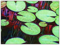 Smiling Lily pad - Abstract (Mike Goldberg) Tags: leaves lily pad pool jerusalem vicinity canong16 effects texture mikegoldberg summer warmth