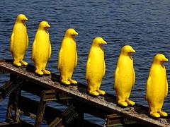 Yellow Penguins (MartinMayer6) Tags: penguin prague yellow watter infront kampa crackingartgroup