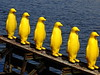 Yellow Penguins (Mayer Martin) Tags: penguin prague yellow watter infront kampa crackingartgroup