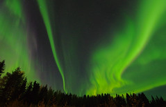 Soon this will start again... (STTH64) Tags: sky green auroraborealis fantasy forest trees aurora