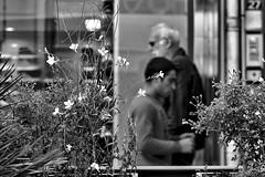 Gnrations... #Darktable #OlympusE-M5MarkII (ImAges ImprObables) Tags: rhnealpes drme ville valence homme jeunehomme hommeag scnederue fleur plante gnration nb noiretblanc bw blackandwhite traitement darktable olympusem5markii