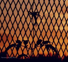cae la noche (ojoadicto) Tags: planta contraluz reja atardecer sunset plant hojas leaves
