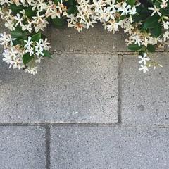 Cinderblock Flower Crown (Zee Jenkins) Tags: flowers cinderblock flower