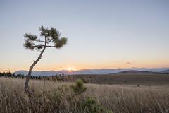hdr of sunset (ed_ro83) Tags: italia italy marche milkway sunset tramonto alberello