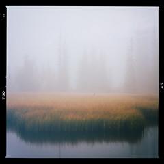 "A foggy day #2 ""analog ver."" (Krogen) Tags: norge norway norwegen nordreland nordtorpa hugulitjernet hst autumn tke fog krogen olympusomd colorefexpro"