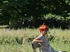 Been there, done that (mikkelfrimerrasmussen) Tags: dyrehaven klampenborg bakken relaxing afslappet rødt hår blue glasses blå briller red hair bench bænk sooc woman