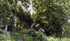 keils den (stusmith_uk) Tags: scotland landscape woods fife largo keilsden july 2016 trees