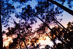 COLOREDTREE (Chlo Chenivesse) Tags: tree arbres colored color wonderful dgrad lumiere exterieur paysage