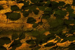 Light and shadow (KF-Photo) Tags: baumstamm bltterschatten blattstrukturen rindenstrukturen
