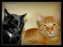 guten Wochenstart !!! (karin_b1966) Tags: katze cat tier animal haustier domesticanimal stubentiger roomtiger 2016 felix garfield