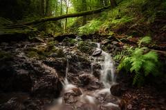 vergessene Natur (Rainer Schund) Tags: vergessene natur nikon nikond700 nature natureexploring naturemasterclass wasser wald waste water wasserfall waterfall cascade steine beauty beautiful bume