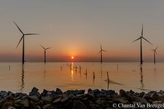 Zonsondergang IJsselmeer (Chantal van Breugel) Tags: zonsondergang ijsselmeer de dijk windmolens canon5dmark111 canon1635 espel flevoland noordoostpolder