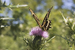 Floral (Theresa Best) Tags: photography theresa best sprouting visions sproutingvisions theresabest nature fmsphotoaday butterfly