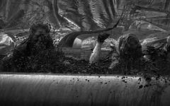 Mudbath (Nikonsnapper) Tags: olympus omd em1 zuiko 1240mm cardiff mud run 5k girls wet dirty f64r1 f64g78r1win