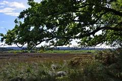 1331-08L (Lozarithm) Tags: arne rspb dorset landscape leaves k1 55300 hdpda55300mmf458edwr justpentax