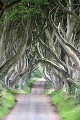 Enigmatic Dark Hedges (reiver iron - RMDPhotos.co.uk) Tags: road trees ireland tree dark country northern beech ballymoney hedges mygearandme mygearandmepremium mygearandmebronze mygear