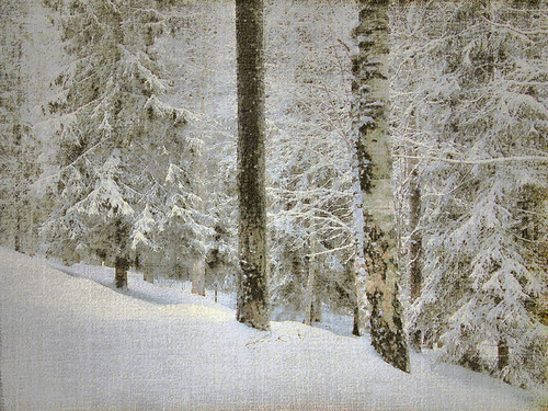Study of a Snowy Forest