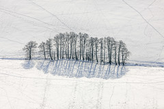 Winter In Upper Bavaria (Aerial Photography) Tags: trees winter by ed aerial bume deu luftbild leaftree luftaufnahme obb lineoftrees bayernbavaria deutschlandgermany dorfen aich laubbaum deciduoustree baumreihe rowoftrees foliagetree oberdorfen fotoklausleidorfwwwleidorfde 16022010 dorfenlkrerding 1ds38087