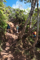 Climbing the Pihea Trail
