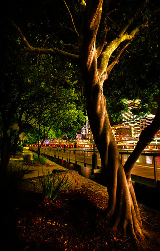Knotted Tree, Southbank Brisbane Qld
