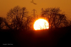Evanton Sunset  27/2/13 (Ally.Kemp) Tags: sunset sun set highlands scottish electricity pylons rossshire evanton