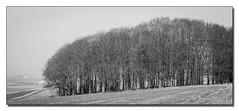Beech Hanger (Keith (M)) Tags: leica trees downs landscape 90mm ridgeway m9 hackpenhill elmaritm leicam990mmelmaritmhackpenhilllandscapedownsridgewaytrees