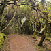 La vegetazione contorta che cresce sulle pendici del vucano Poas