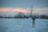 Griffin the Watcher (Adam FLiK) Tags: snow griffin