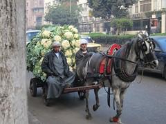 Cauliflower Delivery