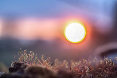 Sunset in a miniature land (Raven Photography by Jenna Goodwin) Tags: sunset sun macro zeiss lens 50mm prime moss jena carl m42 28 tesson