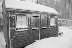 Snowy Shed (sarakwhit) Tags: winter blackandwhite snow snowy capecod shed blizzard blizzardnemo winterstormnemo