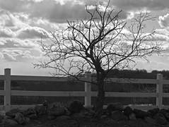 Fence Line Silhouette, Ward Hill MA (Boneil Photography) Tags: blackandwhite tree silhouette clouds fence ma 50mm asahi pentax takumar panasonic m42 manualfocus 50mmf14 haverhill screwmount supertakumar m43 wardhill microfourthirds boneilphotography dmcg10 brendanoneil