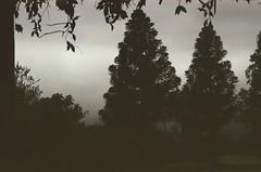treedow ((no name)) Tags: chile shadow naturaleza house black tree love nature pine arbol casa sad minolta amor negro sombra triste sanjuan araucaria granny pino abuelita valparaíso quillota x370 kodak200 quintaregión rautén