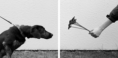 [EXPLORE] Smell the Flowers (Christine Schmitt) Tags: scavenger21 diptych diptychon interaction interaktion hund dog blume flower cheesy42