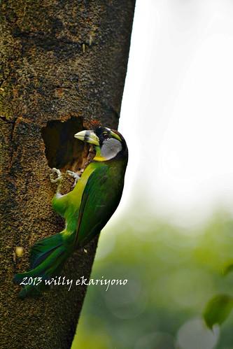 Flickriver Willy Ekariyono S Most Interesting Photos