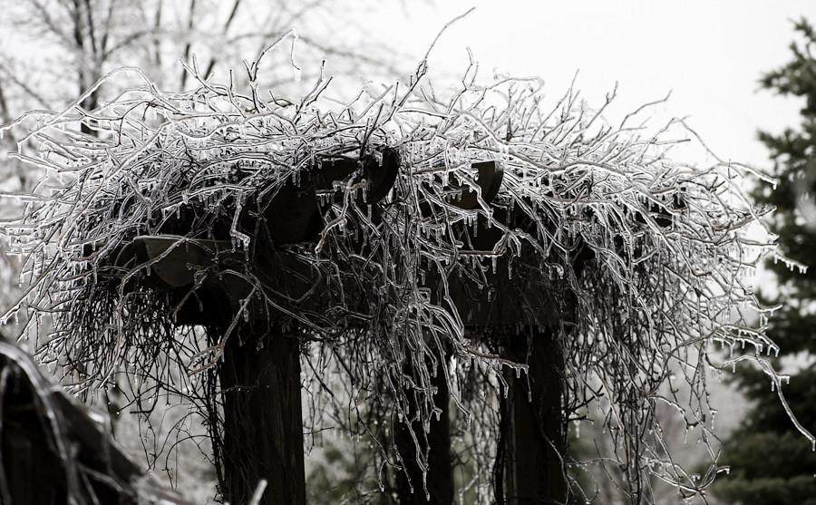 Ice storm 031