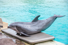 Crunch Weigh-In (lolilujah) Tags: world california ca sea playing scale smiling train point jumping san dolphin tail rocky diego captive seaworld preserve captivity raised interaction connections bottlenose cetacean trained lolilujah