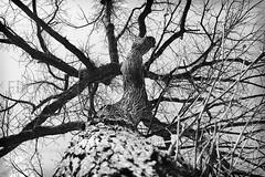 32 (LandoltEOSphoto) Tags: wood b sky bw white black tree nature sticks noir branch w bark stick