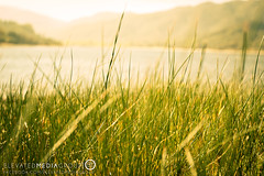 Naturescapes (Elevated Media Group) Tags: california ca wood sunset summer sun lake nature grass set canon silver studio landscape spring media horizon group flare hesperia elevated dennis silverwood t3i dns 600d arriaza