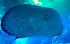 IMG_0923 (shirokami85) Tags: white black animals penguins dubai sony sharks fishes burj rx100 khaleefa