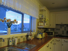 My Kitchen!! (ShelaghW) Tags: nature gardens scotland spring seasons mygarden myhome daffodils springtime containers containergardening windowledges shelaghw