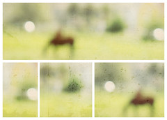 the field (RL Mulholland) Tags: light horses painterly abstract blur texture animals countryside blurry soft bright bokeh pastel digitalart greens yellows tones thefield lesbrumes