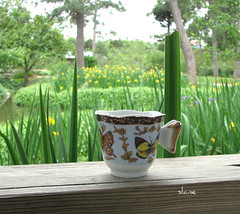Butterfly Tea Cup (snap713) Tags: butterfly garden japanese tea houston teacup hermannparkjapanesegarden