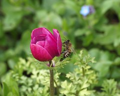 zu spt _001 (bratispixl) Tags: traunreut stadtrundweg chiemgau oberbayern germany bratispixl belichtungsproben lichtwechsel licht schatten farben blte insekt wespe biene