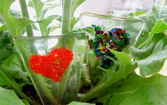 Fused Plant Decorations (5) (Glittering Prize - Trudi) Tags: plant glass decoration marker trudi fused britcraft glitteirngprize