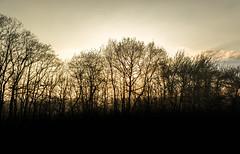 _PK52444.jpg (budbrain) Tags: light sun flower berg sunrise landscape licht sonnenuntergang pentax wiese blumen josef layer landschaft koblenz k5 lanschaft remstecken sejrek budbrainde