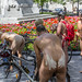 world naked bike ride montreal 17
