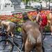 world naked bike ride montreal 17