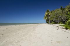 W-IMG_6266 (baroudeuses_voyage) Tags: ocean sea coral oz australia diving snorkeling cairns reef greatbarrierreef cay eastcoast australie atoll gbr michaelmascay oceanspirit grandebarrieredecorail